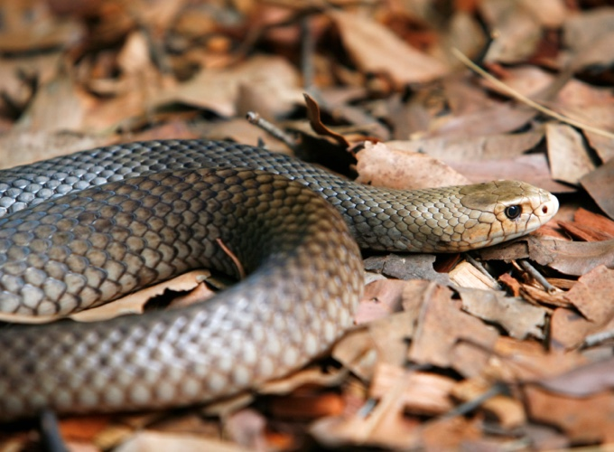 the 10 most dangerous animals in australia yummypets