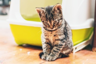 La cystite chez le chat : causes et traitements