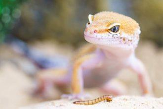 Êtes-vous prêt à adopter un reptile ?