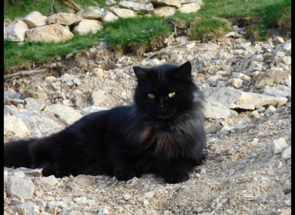 le chat noir porte bonheur ou porte malheur. Black Bedroom Furniture Sets. Home Design Ideas