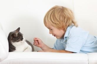 Enfant et chat : à chacun son espace !