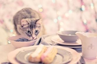 9 aliments dangereux pour votre chat
