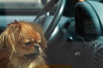 Mon chien a peur de la voiture : que faire ?