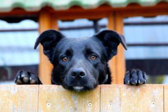 Comprendre les fugues de son chien et y remédier