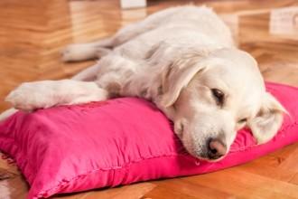 La diarrhée chez le chien : causes et traitements