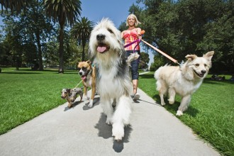 5 sports to do with your dog