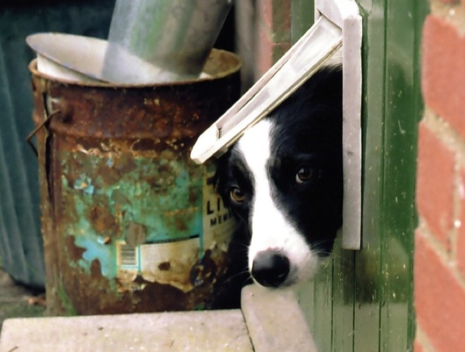 Cats And Dogs How To Choose Your Cat Flap Yummypets