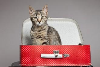 Organiser mes vacances avec ou sans mon chat