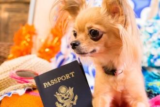 Le passeport européen pour les animaux de compagnie
