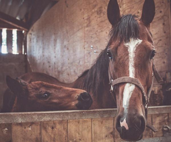 Rencontre avec Hélène Vauche, une photographe animalière