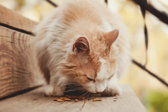 How to detect a food allergy in cats