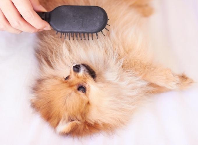 Brosser un chien qui ne se laisse pas faire - Yummypets