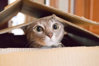 The quick cat quiz: can you get 100%?