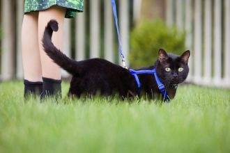Walking your cat: advice and accessories