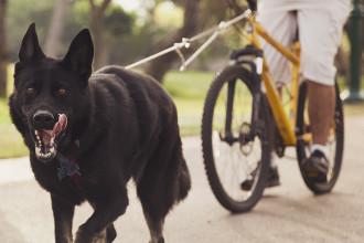 Le canivtt : le sport canin qui a la…