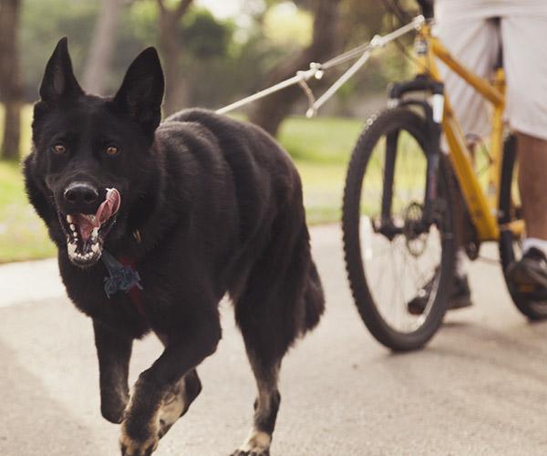 Le canivtt : le sport canin qui a la côte !