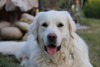 Comment gérer l'épilepsie du chien ?