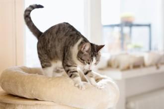 Sécuriser la maison pour votre chat