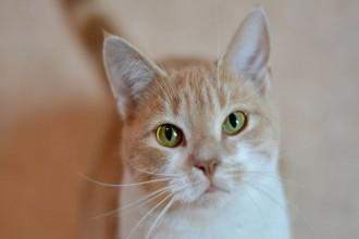 Anxiété de séparation du chat : comment la soulager ?