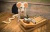 Odile la chienne vous invite ds son appart de catho - 3 part 3