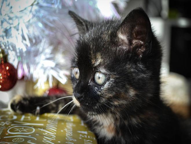 4 conseils pour faire tenir un sapin de no l quand on a un chat yummypets. Black Bedroom Furniture Sets. Home Design Ideas
