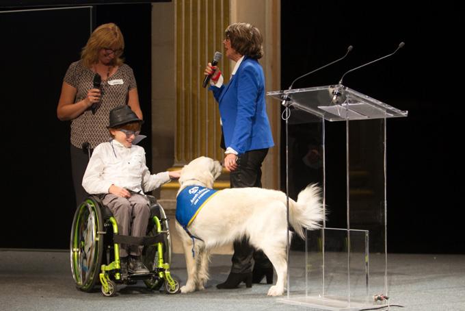 handichiens_chiens_handicap