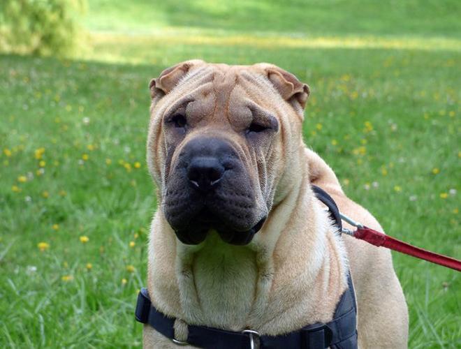 Comment repérer et soulager l'arthrose du chien ? - Yummypets