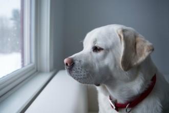 Les 3 signes de dépression chez le chien