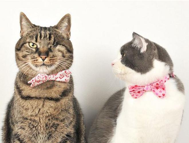Cat in berlin n uds papillons pour chats gentlemen - Noeud papillon chat ...