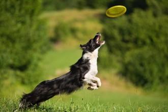 Le frisbee : une discipline qui revient…