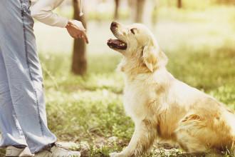 Comment éduquer son chien : 5 bases indispensables
