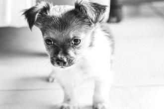 Se préparer pour votre nouveau chiot ou votre nouveau chien
