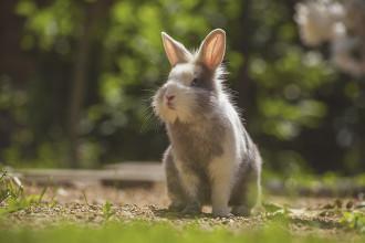 Qu'est-ce que la myxomatose chez le lapin ?