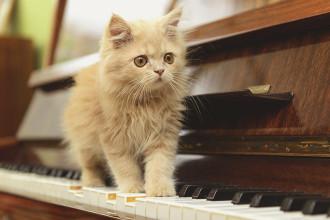 Quelle playlist pour mon chat ?