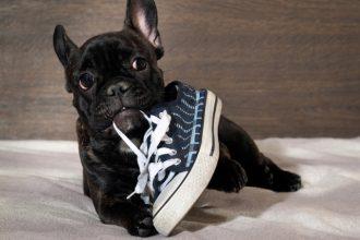 Comment empêcher votre chien de mâcher vos affaires ?