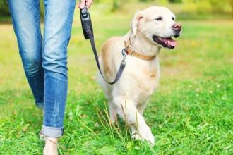 Où et comment se promener avec son chien ?