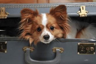 Voyager avec votre chien ou votre chiot