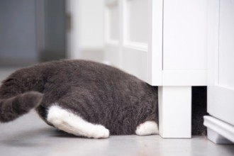 DIY : 20 ideas for hiding your cat's litter box