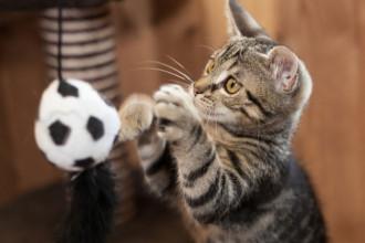 Le top 16 des meilleurs jeux pour chats
