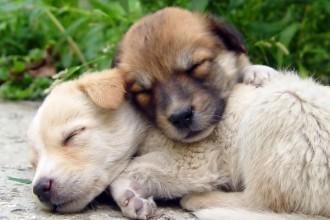 Métier : Éleveur canin - Études,…