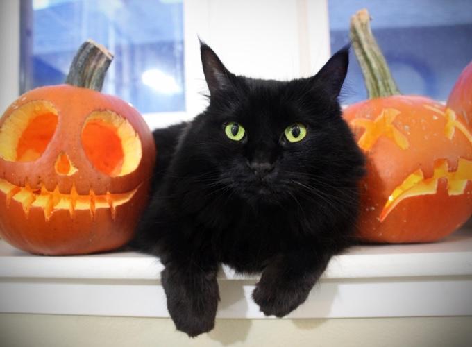 Célèbre Chats noirs : une superstition qui persiste ! - Yummypets RW11