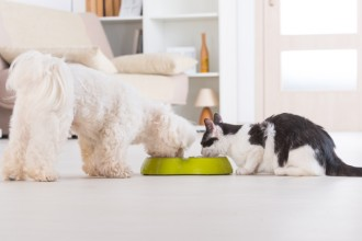 30 aliments dangereux pour nos chiens et chats