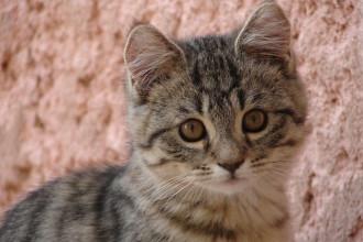 Accueillir un nouveau chaton à la maison