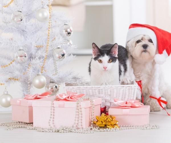 Noël : les 10 meilleures idées de cadeaux pour chiens et…