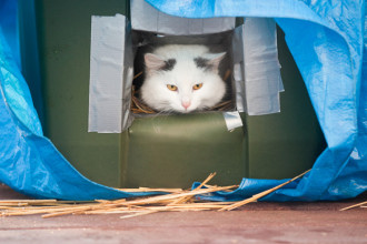 DIY: a winter cat shelter