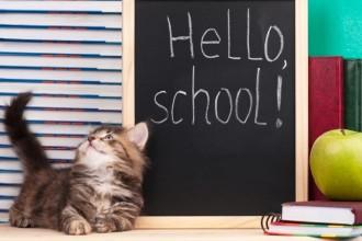 Comment éduquer son chaton ? Conseils et règles de base