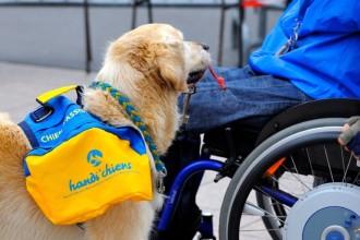 HANDI'CHIENS : on dit merci aux chiens…