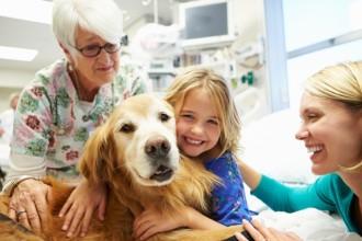 Médiation animale : les animaux aident…