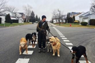 Promeneuse de chiens, mais pas que...