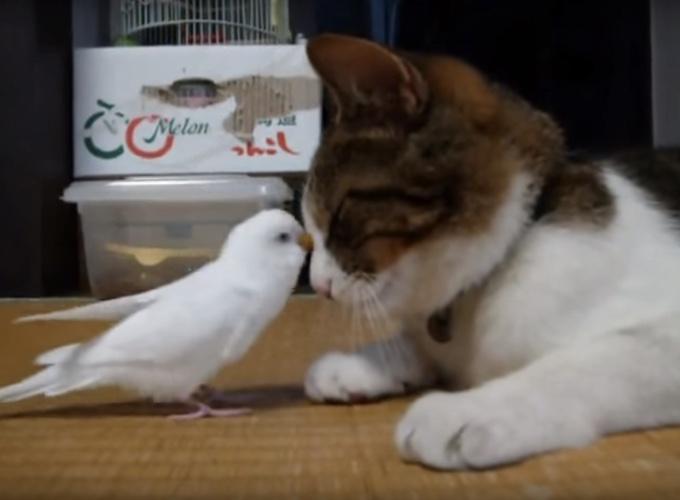 belle chasse chatrooms Plus belle la vie 21:00 - documentaire de société la révolution dolto.